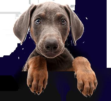 dog-separator
