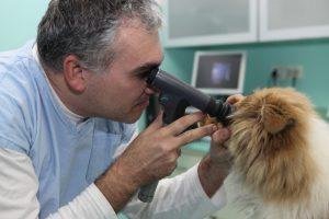 ochorenia_oka_u_kolii_a_sheltii_priama_oftalmoskopia