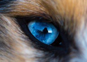 Ako vidia zvieratá
