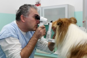 ochorenia_oka_u_kolii_a_sheltii__strbinova_lampa
