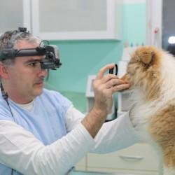 Klinické oftalmologické vyšetrenie psov