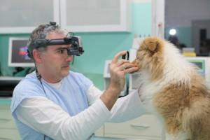 ochorenia_oka_u_kolii_a_sheltii_nepriama_oftalmoskopia