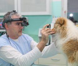 Klinické oftalmologické vyšetrenie