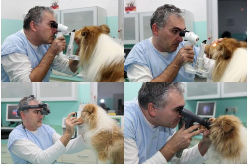klinické oftalmologické vyšetrenie, Vyšetrenie očí psov