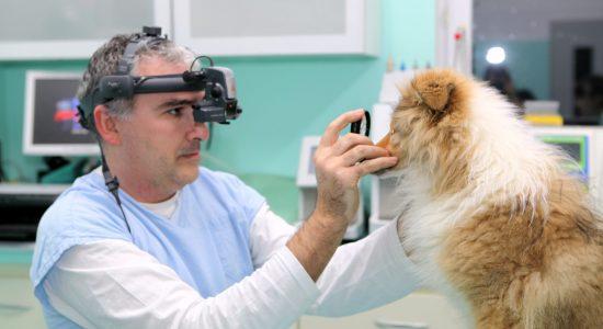 špecializované vyšetrenie oči, pes, mačka