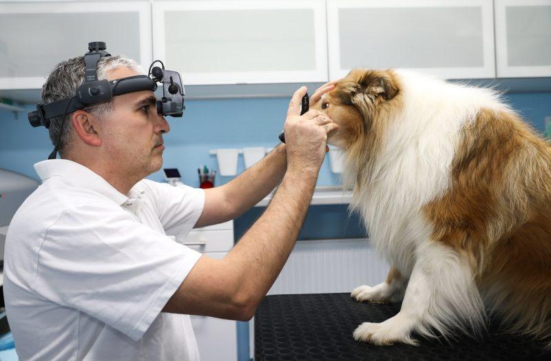 veterinárna oftalmológia