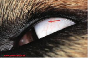 Anomálie rastu očných rias