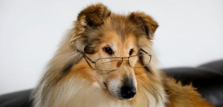 veterinárny oftalmológ