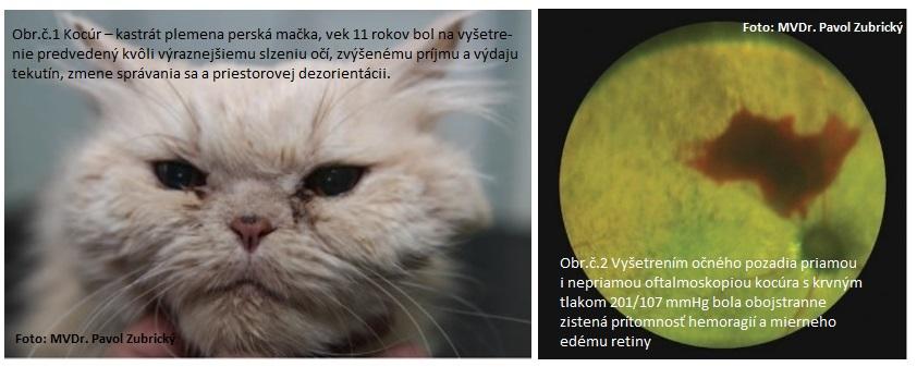 Očné lézie v dôsledku systémovej hypertenzie, mačka, vysoký krvný tlak