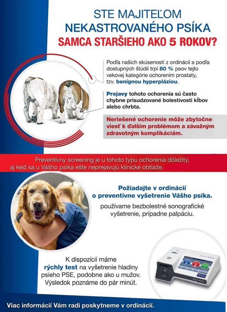 Benígna hyperplázia prostaty, pes, ochorenie prostaty u psov