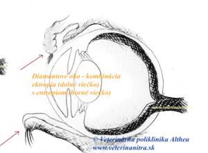 Entropium aektropium upsov