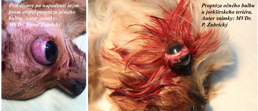 Vypadnuté oko u psa