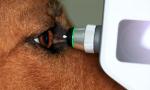 Meranie očného tlaku