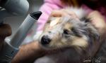 Vyšetrenie očí psa